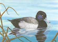 Missouri Duck Stamp Print 1981 Lesser Scaup by Tom Crain