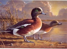 Minnesota Duck Stamp Print 1989 American Wigeon by Jim Hautman
