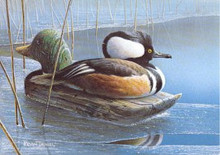 Minnesota Duck Stamp Print 1990 Hooded Merg. / decoy by Kevin T. Daniel