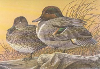 Michigan Duck Stamp Print 1987 Green-winged Teal by Larry Hayden Artist Proof