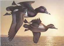 Michigan Duck Stamp Print 1985 Ring-necked Ducks by Robert Steiner