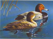 Michigan Duck Stamp Print 1982 Redhead Ducks by G. van Frankenhuyzen