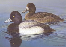 Michigan Duck Stamp Print 1980 Lesser Scaup by Larry Hayden