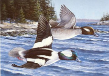 Maine Duck Stamp Print 1987 Buffleheads by Ron Van Gilder