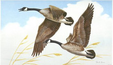 Iowa Duck Stamp Print 1975 Canada geese by Mark Reece