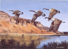Idaho Duck Stamp Print 1992 Canada Geese by Richard Plasschaert Artist Proof