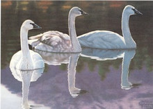 Idaho Duck Stamp Print 1990 Trumpeter swans by francis Sweet Medalion Edition