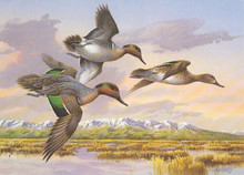 Idaho Duck Stamp Print 1988 Green-winged Teal by Jim Killen