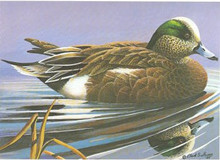 Florida Duck Stamp Print 1981 American Widgeon by Clark Sullivan