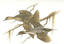 Florida Duck Stamp Print 1980 Pintails by Ernest Simmons