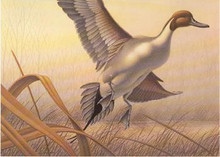 Delaware Duck Stamp Print 1985 Pintails by Don Breyfogle