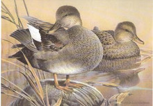 California Duck Stamp Print 1991 Gadwalls by Larry Hayden Artist Proof