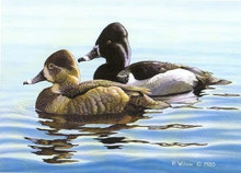 California Duck Stamp Print 1984 Mallard Decoy by Robert Montanucci