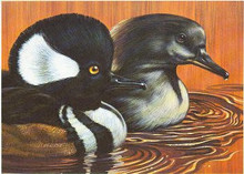 California Duck Stamp Print 1978 Hooded Mergansers by Kenneth L. Michaelsen