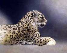 Persion Le - Leopard Portrait by Jorge Mayol