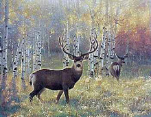 Morning Glory - Mule Deer by Nancy Glazier