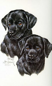 Puppies - Black Labs by Roger Cruwys