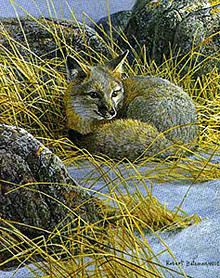 Curled Up- Swift Fox by Robert Bateman