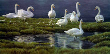 Bank Of Swans by Robert Bateman