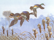 Florida Duck Stamp Print 1985 Wood Ducks by Bob Binks