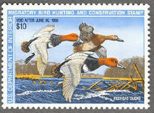 Federal Duck Stamp RW54 ( 1987 Redheads )