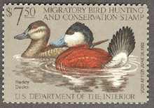 Federal Duck Stamp RW48 ( 1981 Ruddy Ducks )