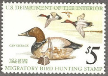 Federal Duck Stamp RW42 ( 1975 Canvasbacks / Decoy )