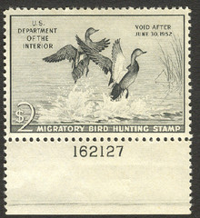 Federal Duck Stamp RW18 ( 1951 Gadwalls )