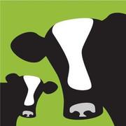 Avalisa Cows