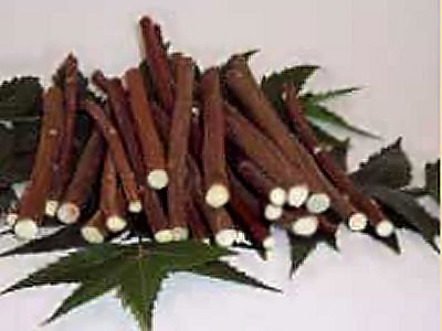 Use Neem Twigs and Neem Bark for Cleaning Teeth