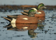 Greenhead Gear GHG Hunter Series Life Size Wigeon - 6 pk - 700905730438