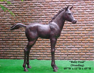 Baby Foal - Standing