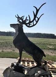 "106"" Red Stag on Rock Ledge"