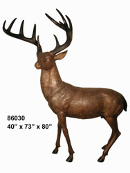 American Deer - Buck
