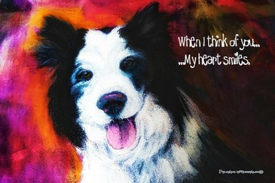 Border Collie-When I think of you...