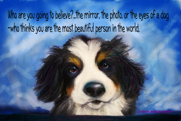 """(H) Bernese Mountain dog baby""""who are you going to believe"""""""