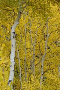 dIANKA Golden Majesty (photography)