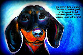 (H) Black Dachsy- Who are you going to believe...