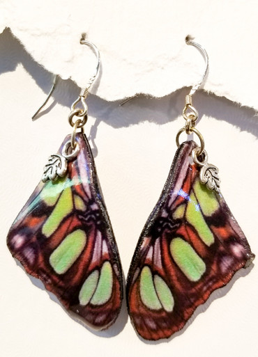 Siproeta Stelenes-Large earrings