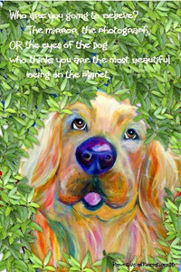 (V) Golden Retriever- Who are you going to believe....