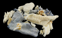 Assorted Coral Pieces • Pound