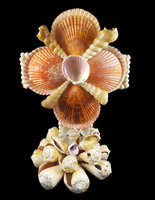 Pecten and Strombus Cross Stand