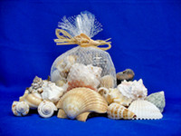 Large Shell Mix Gift Pack