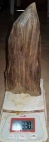 Agarwood/Aloeswood/Oud  showpiece from  high mountain in Far Eastern Indonesia 330grams