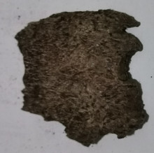 Agarwood/Aloeswood Oud chips, Burma 1 piece 13 grams Mushroom