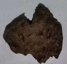 Agarwood/Aloeswood Oud chips, Burma 1 piece 14 grams Mushroom