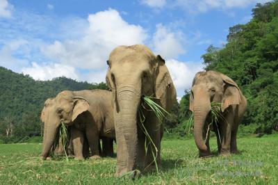 elephant-herdgrass.jpg