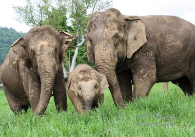 elephantbabyfield.jpg