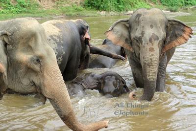 elephantfamilyriver.jpg