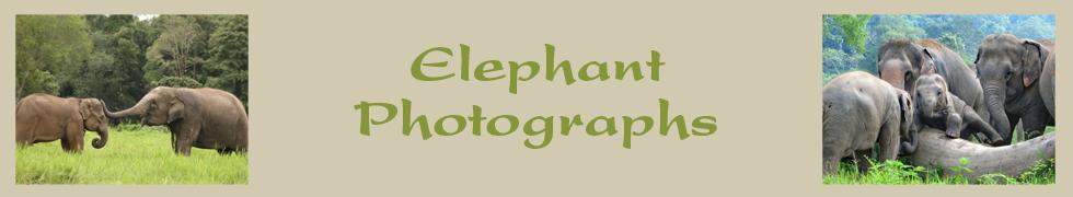 elephantphotographsnew.jpg
